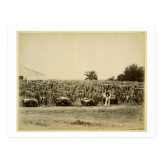 Drying leather, Argentina (albumen print on card) Postcard