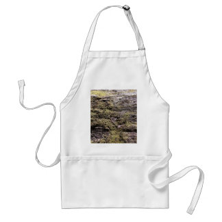 Drying moss on fallen tree decaying in wilderness apron