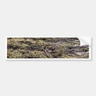 Drying moss on fallen tree decaying in wilderness bumper sticker