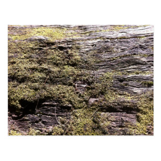 Drying moss on fallen tree decaying in wilderness postcard
