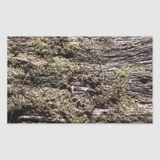 Drying moss on fallen tree decaying in wilderness rectangular sticker