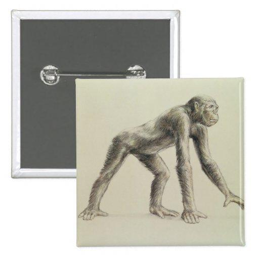 Dryopithecus Africanus Pins