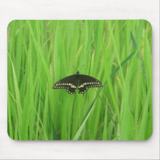 DSC01361 copy Mouse Pad