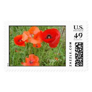 DSC01494, Poppies Stamp