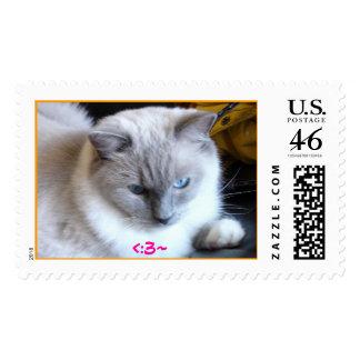 DSC03669b 3 Postage Stamp