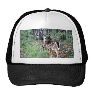 DSC05429 copy Trucker Hat