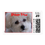 DSC_0060, Bichon Frise Postage Stamp