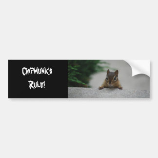 DSC_0230, Chipmunks Rule! Car Bumper Sticker