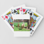 DSC_0239.jpg Card Decks