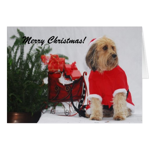 DSC_4176, Merry Christmas! Card