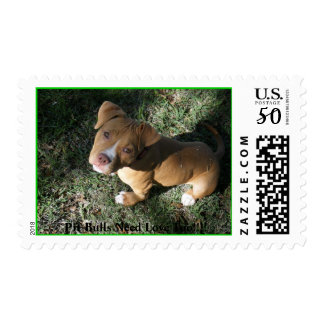 DSCF0597, Pit Bulls Need Love Too!!!! Postage
