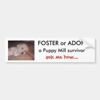 DSCF0636, FOSTER or ADOPT                      ... Bumper Sticker