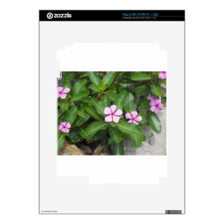DSCN0005.JPG SKIN FOR iPad 2