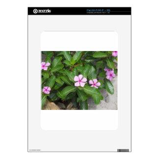 DSCN0005.JPG SKINS FOR iPad