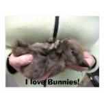 DSCN0356, I love Bunnies! Post Card
