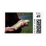 DSCN0563, Trout Catch and Release...San Juan Ri... Postage Stamp