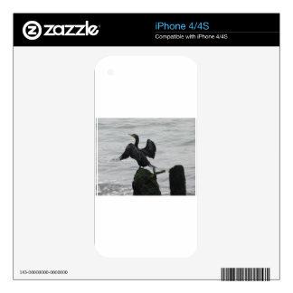 DSCN6580.JPG DECALS FOR iPhone 4S