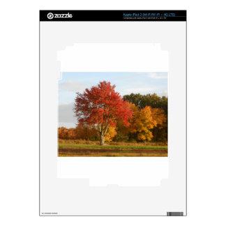 DSCN6831.JPG Autumn Trees in Connecticut iPad 3 Skin
