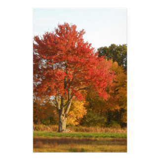 DSCN6831.JPG Autumn Trees in Connecticut Stationery