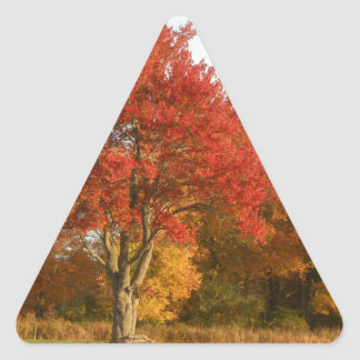 DSCN6831.JPG Autumn Trees in Connecticut Triangle Sticker