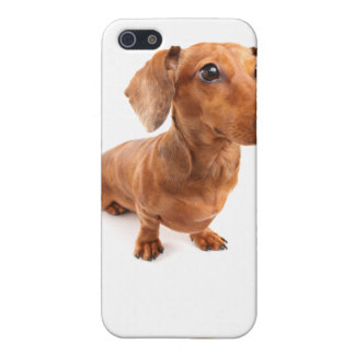 DT# 22789108Solo Spunky Smooth Doxie T-shirts iPhone 5 Cases