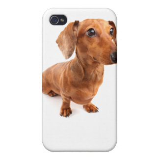 DT# 22789108Solo Spunky Smooth Doxie T-shirts iPhone 4 Cover
