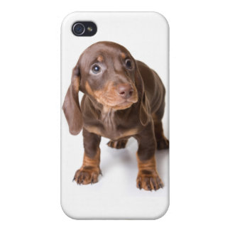 DT#4055994 Solo Puppy Eyes Choc Doxie iPh4 Cover iPhone 4 Case