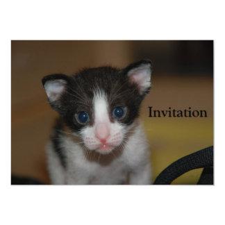 Dubai Kitten-Hello World Card