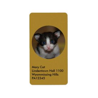 Dubai Kitten-Hello World Label