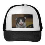 Dubai Kitten-Hello World Mesh Hat