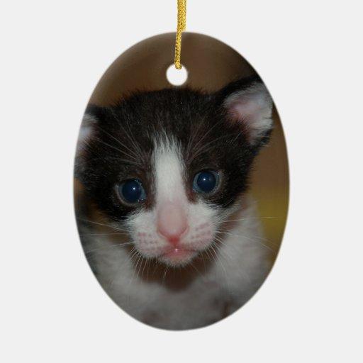 Dubai Kitten-Hello World Ornament
