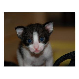 Dubai Kitten-Hello World Postcard