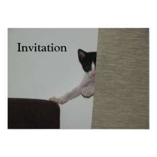 Dubai Kitten - playing Peek A Booh Card