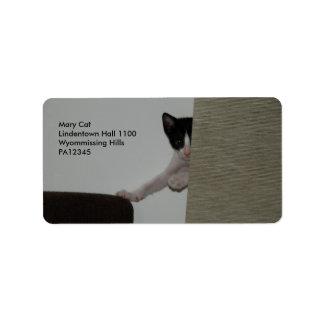 Dubai Kitten - playing Peek A Booh Label