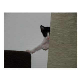 Dubai Kitten - playing Peek A Booh Postcard