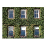Dublin Town House Windows And Climbing Ivy Postcard at Zazzle