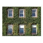 Dublin Town House Windows And Climbing Ivy Postcards