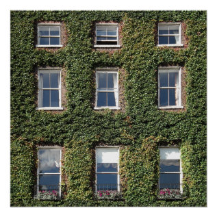 Dublin Town House Windows And Climbing Ivy Poster at Zazzle
