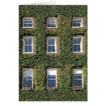 Dublin Town House Windows Climbing Ivy Greetings Card at Zazzle