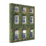Dublin Town House Windows & Ivy Canvas Print at Zazzle