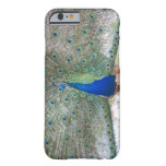 Dubrovnik,Croatia,Lokrum Island,colorful Barely There iPhone 6 Case