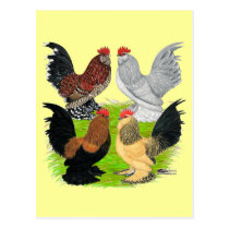 D'Uccles Four Roosters Postcard