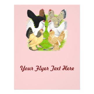 D'Uccles Six Hens Flyer