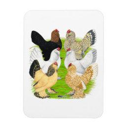 D'Uccles Six Hens Magnet