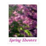 Duchas de la primavera y cerezos florecientes postal