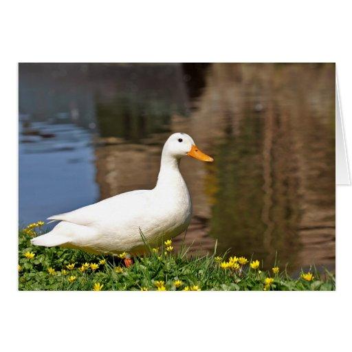 duck001 blanco tarjeta de felicitación