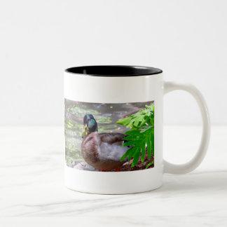 Duck 11 oz Two-Tone Mug