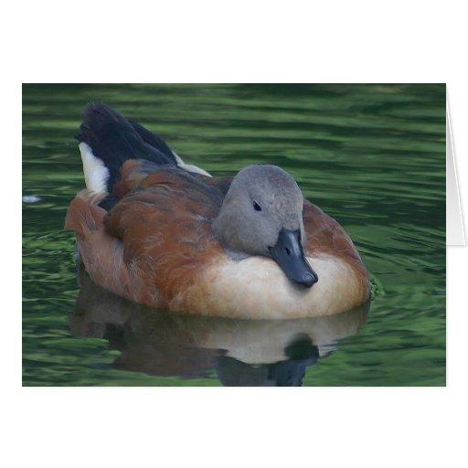 duck-2_Jon Sullivan Tarjeta De Felicitación