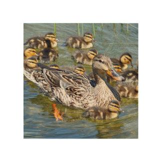 duck-36.jpg cuadros de madera