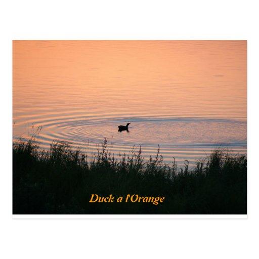 Duck a l'Orange Postcard